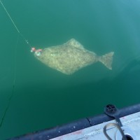 This Mama Halibut was released for the future.