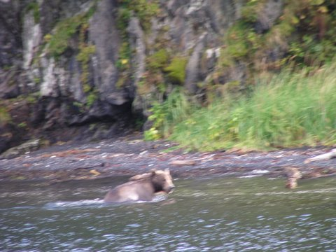 Kodiak Brown Bear Story