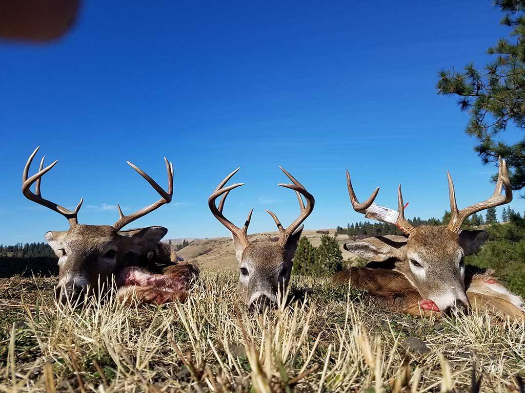 Idaho Bucks